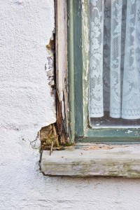 Damp and Wood Rot